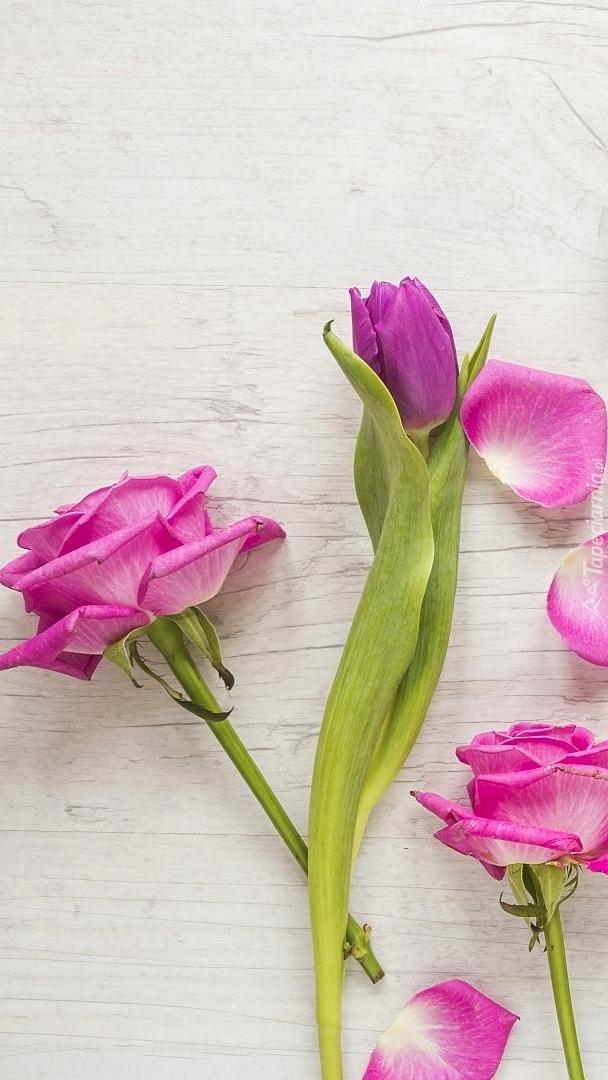 Róża i tulipan