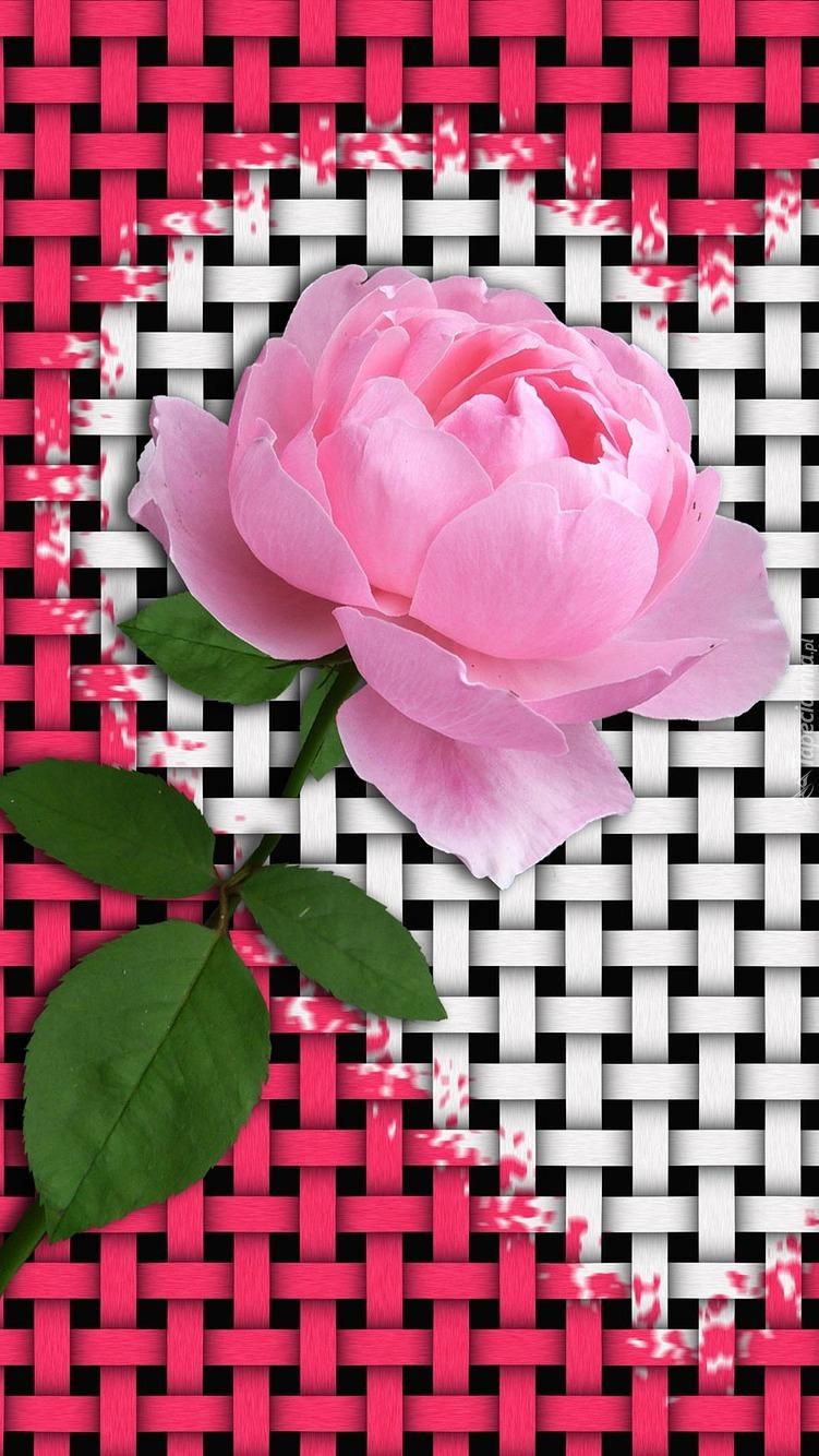 Róża na białym sercu