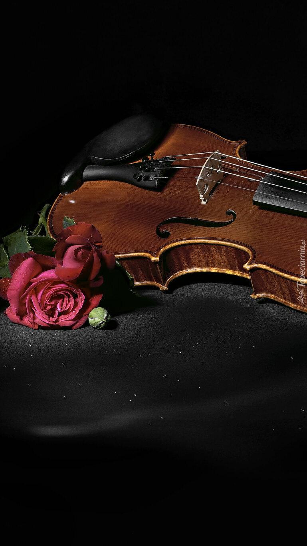 Róża obok skrzypiec