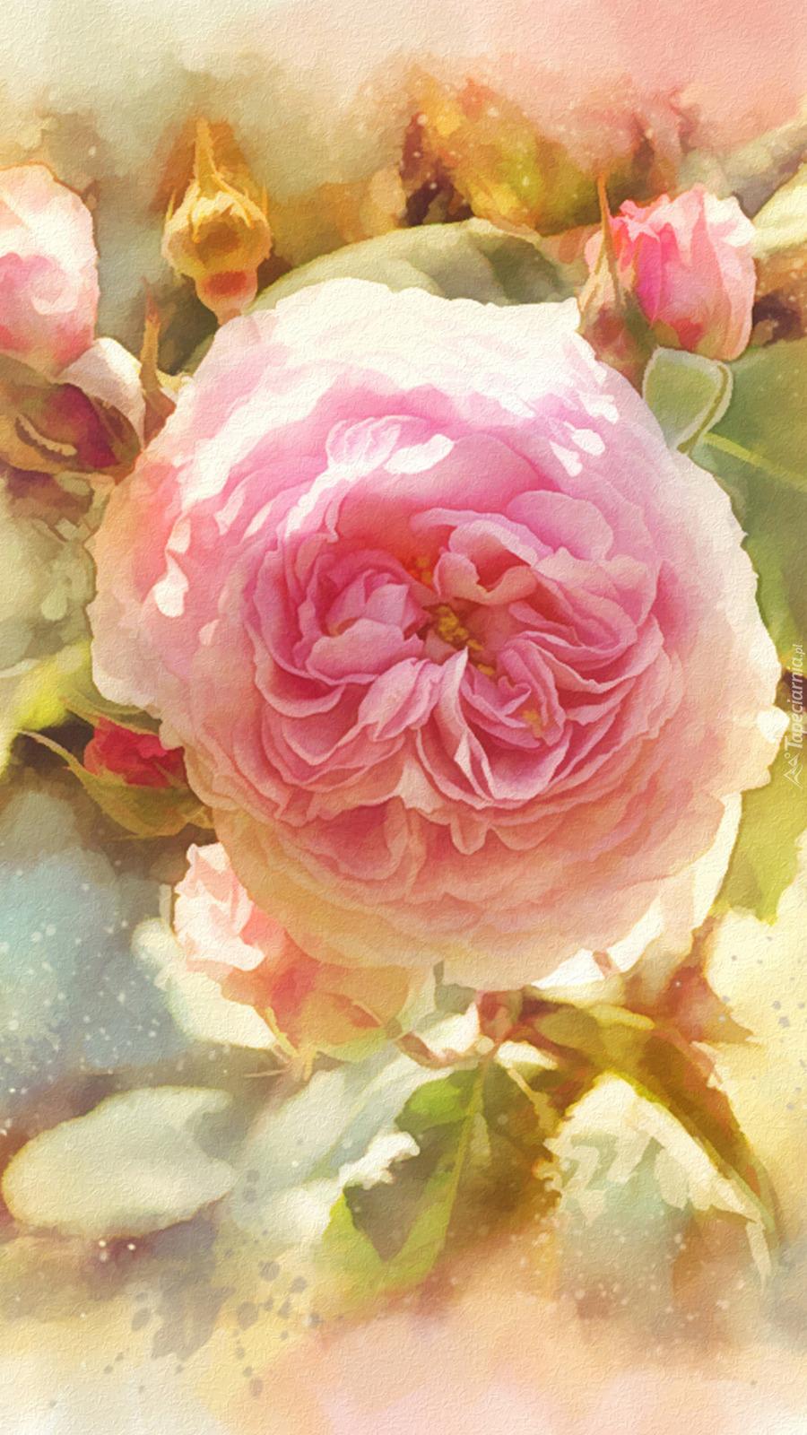 Róża z pąkami w grafice