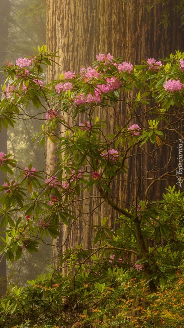 Różanecznik pod drzewem w lesie