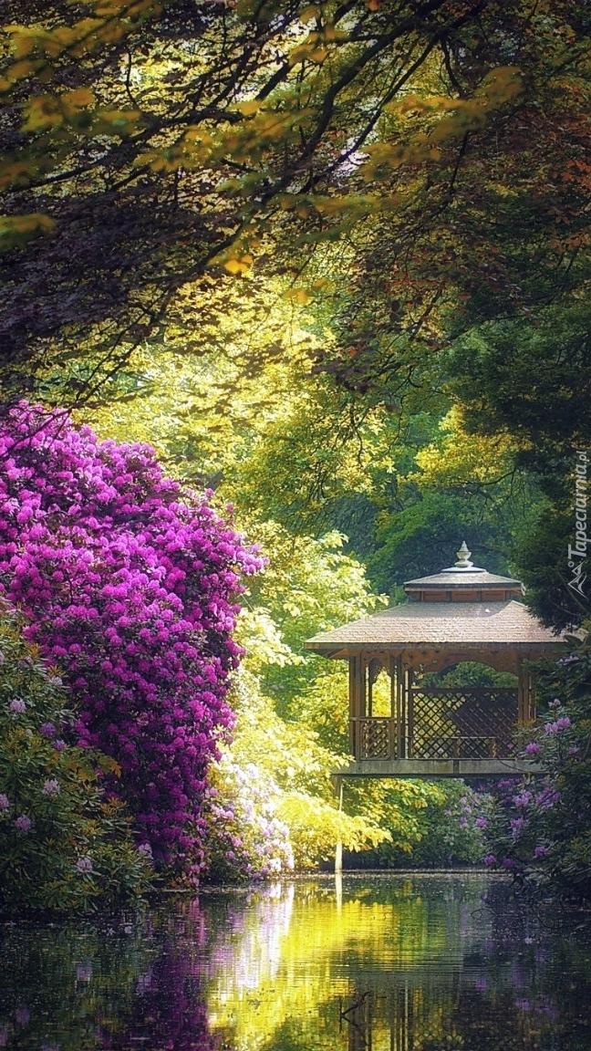 Różaneczniki obok altany nad stawem