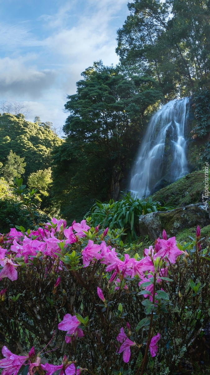 Różaneczniki obok wodospadu