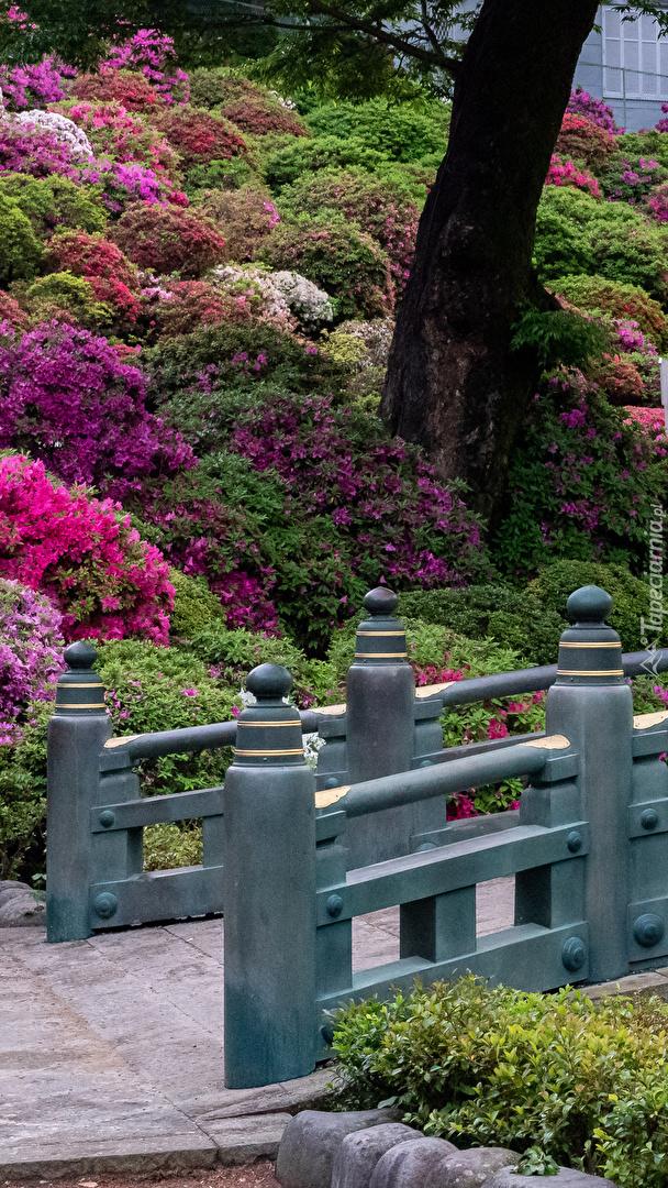 Różaneczniki przy moście
