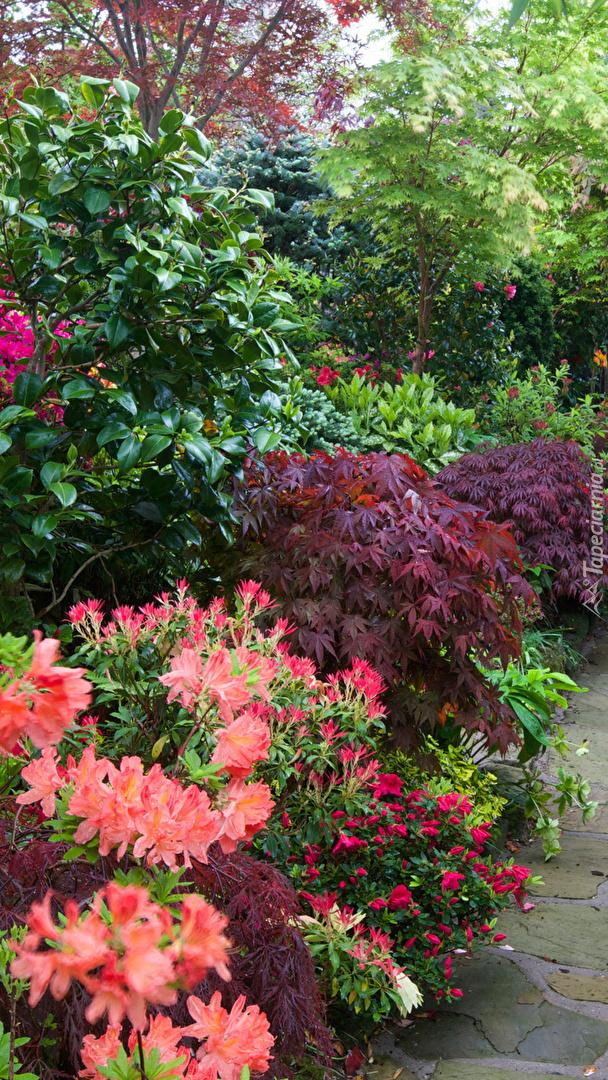 Różaneczniki w ogrodzie
