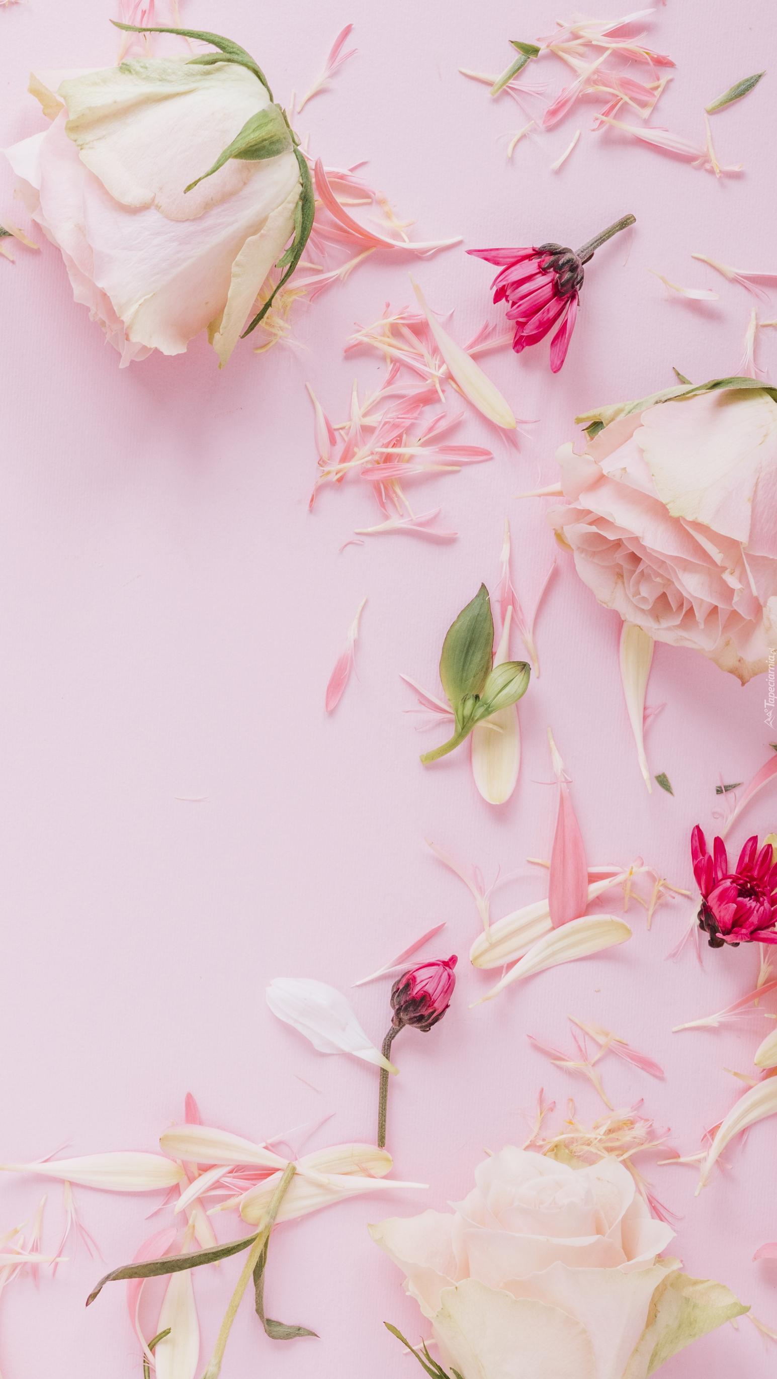 Róże i rozsypane płatki