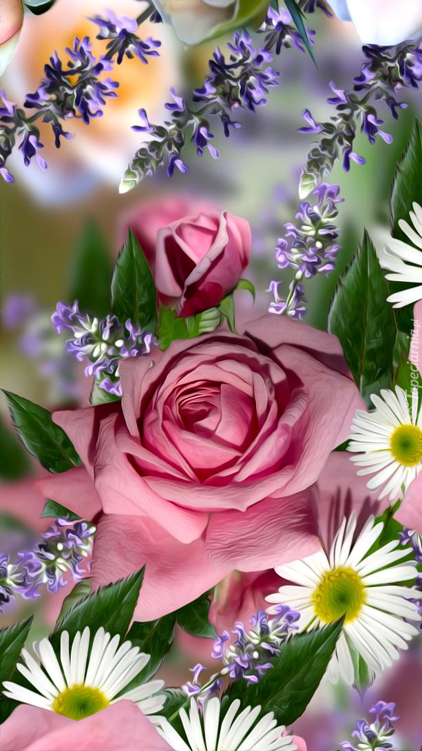 Róże i stokrotki w grafice