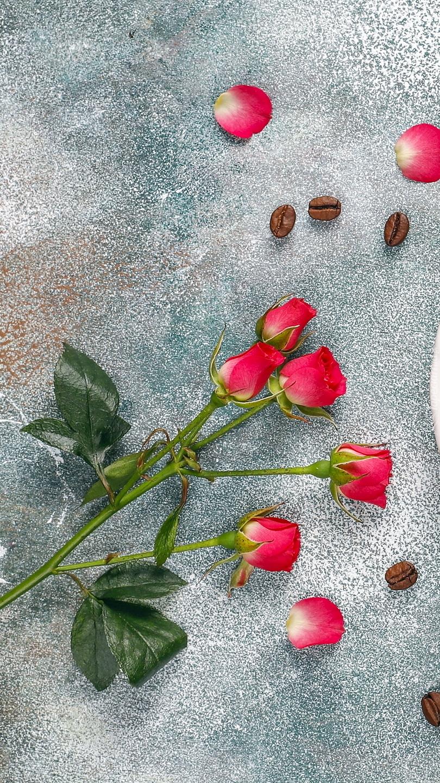 Róże obok ziaren kawy
