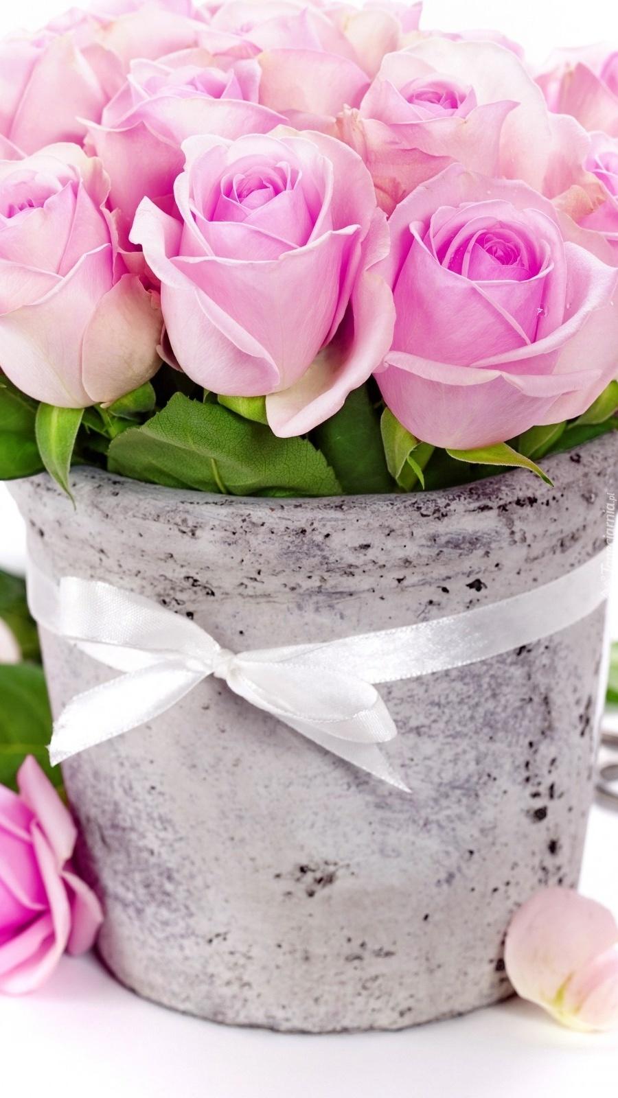 Róże w donicy