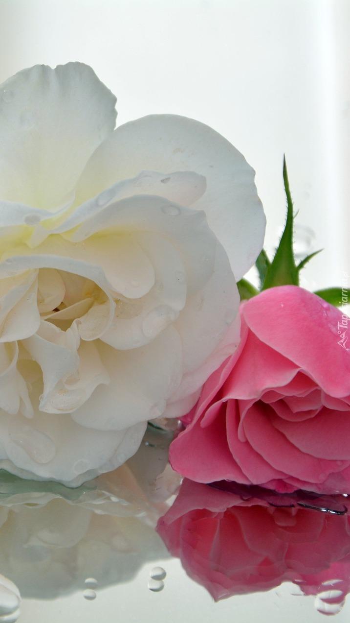 Róże w kroplach wody
