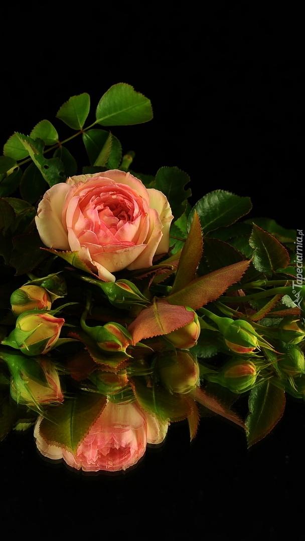 Róże z pąkami na czarnym tle