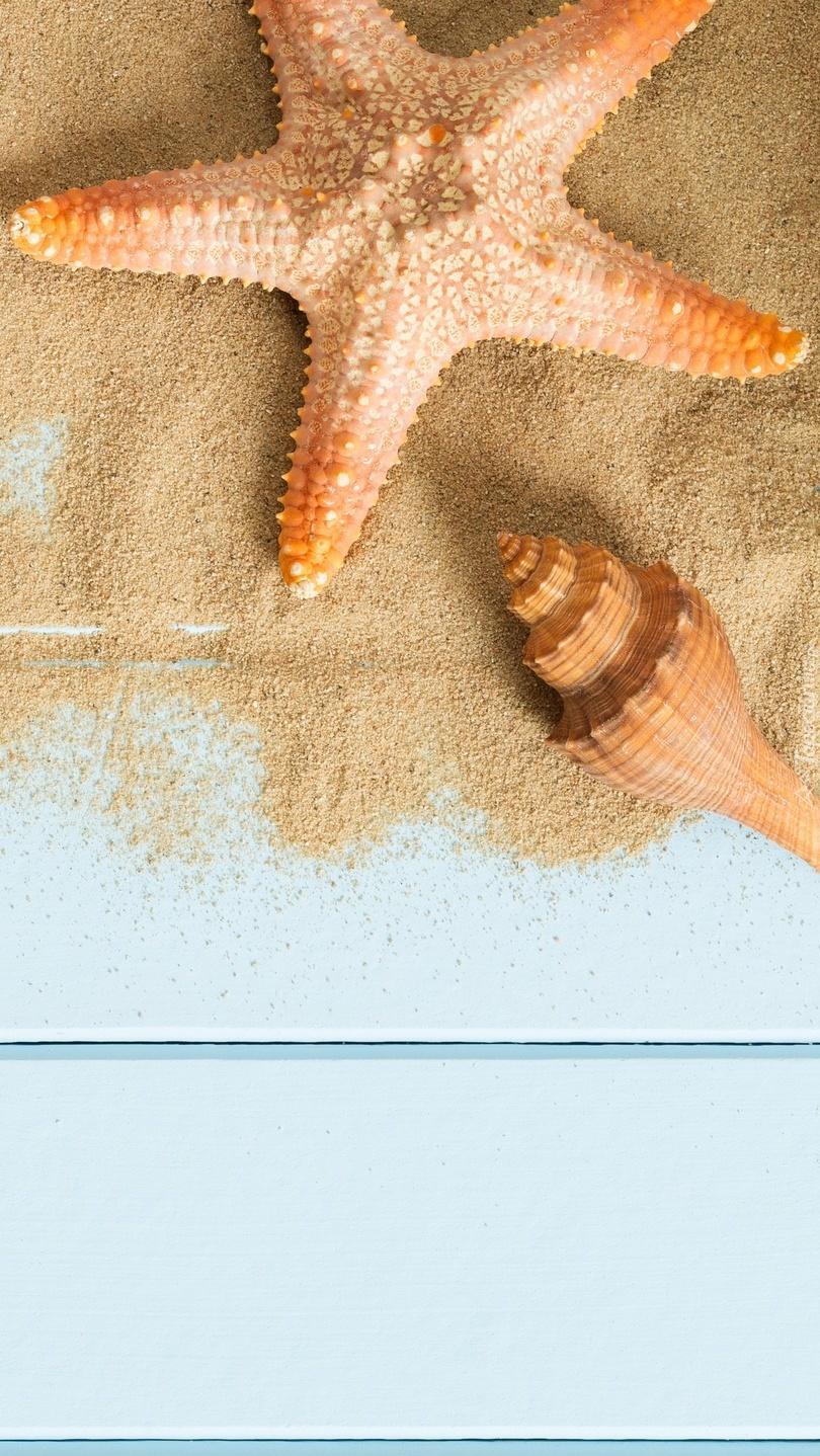 Rozgwiazda  i muszelka na piasku