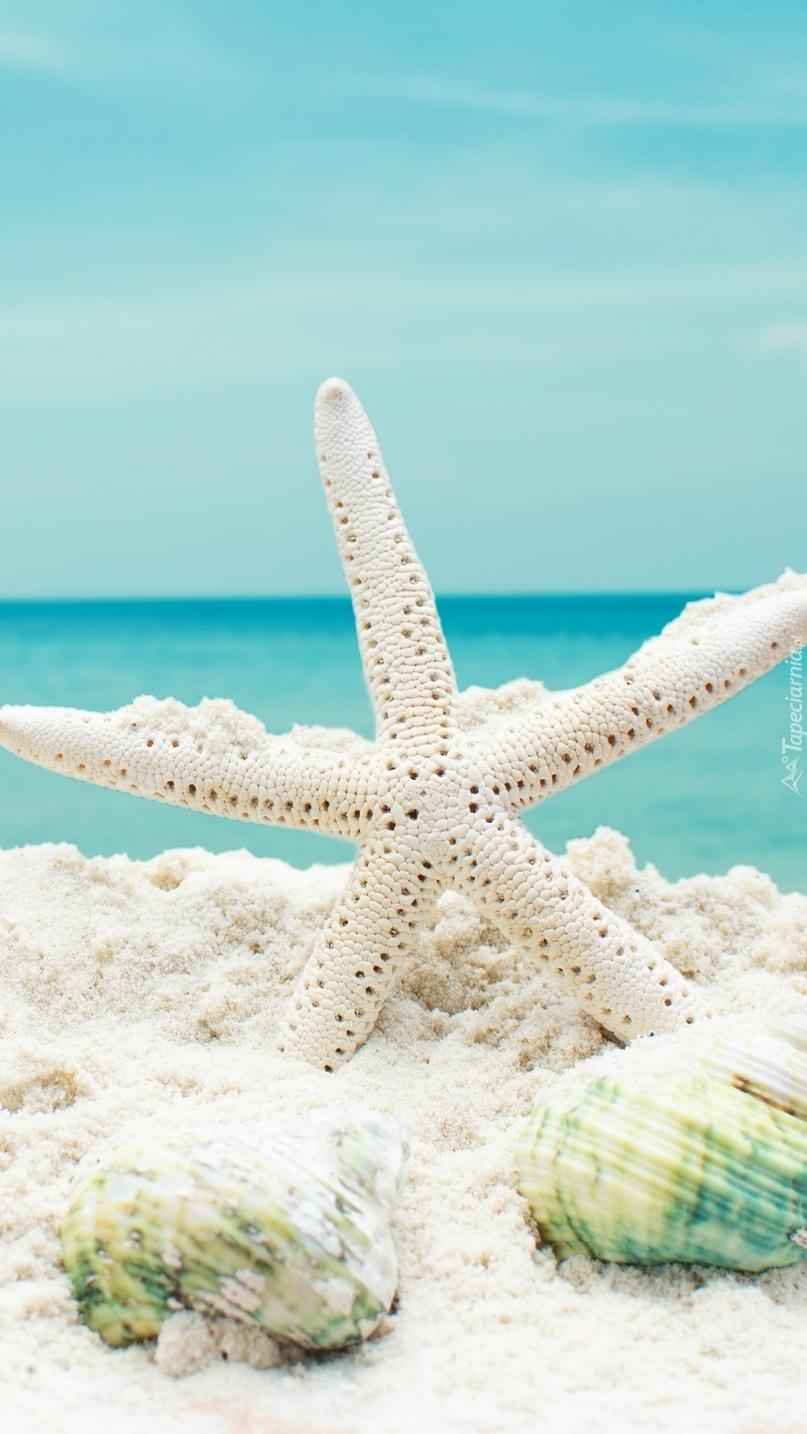 Rozgwiazda i muszelki na piasku