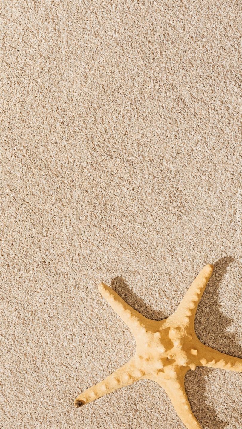 Rozgwiazda na piasku