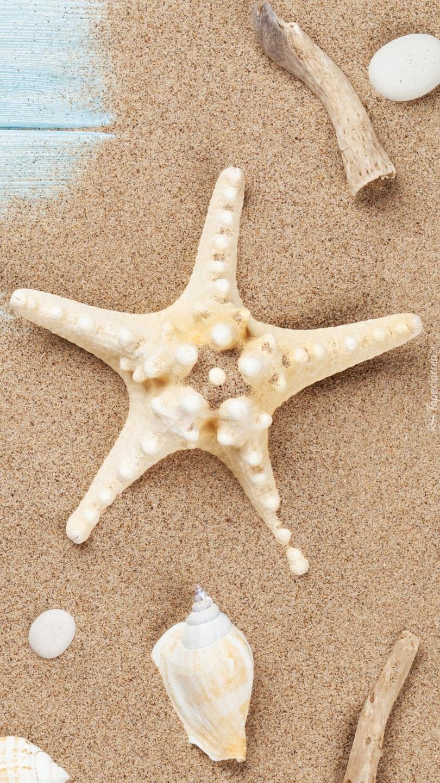 Rozgwiazda z muszelkami na piasku