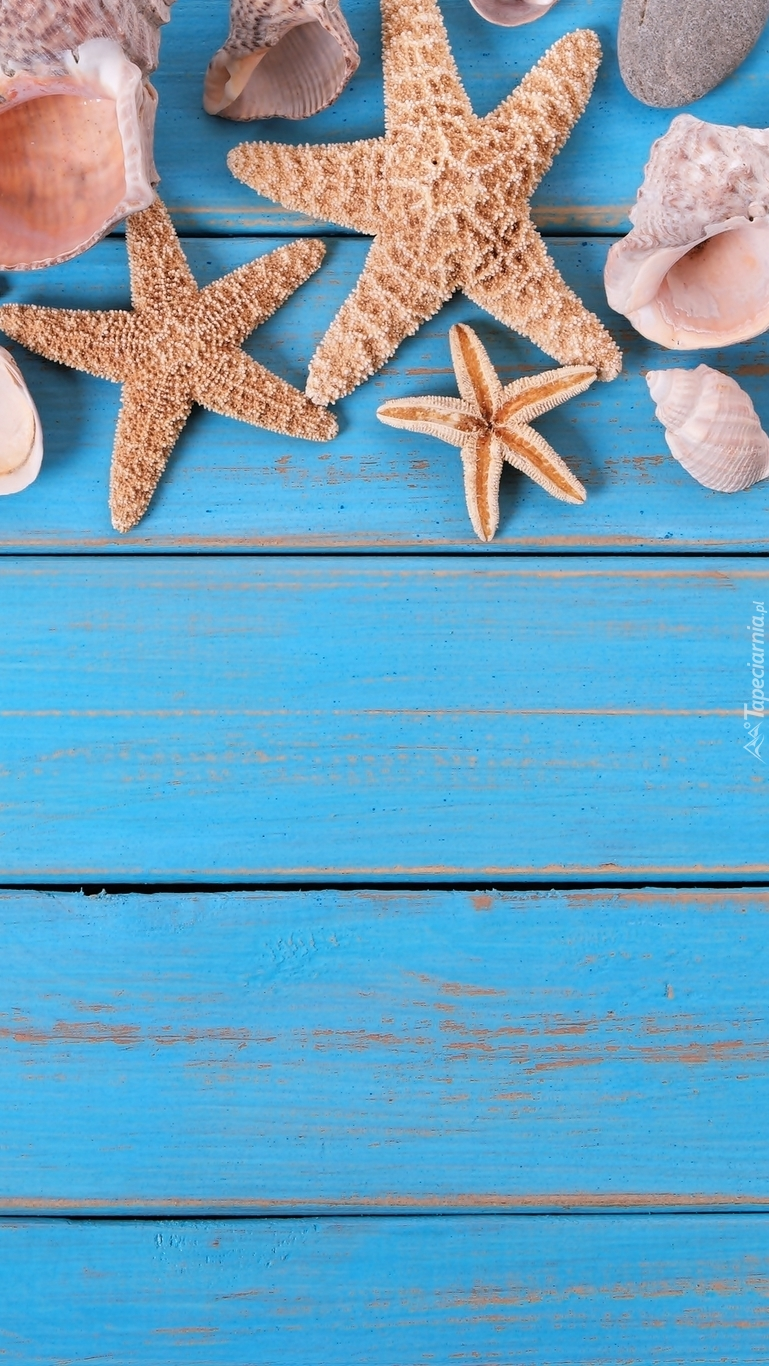 Rozgwiazdy i muszelki na deskach