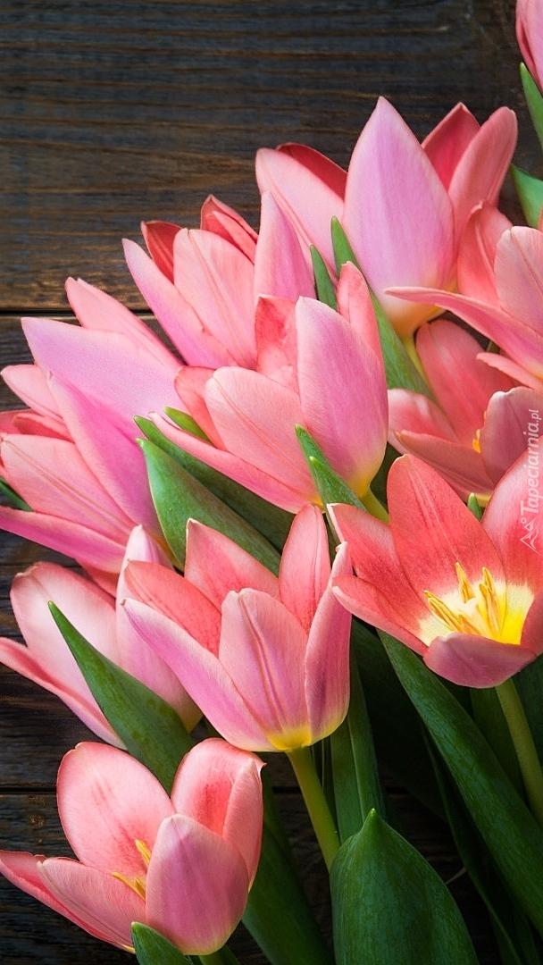 Rozkwitnięte tulipany