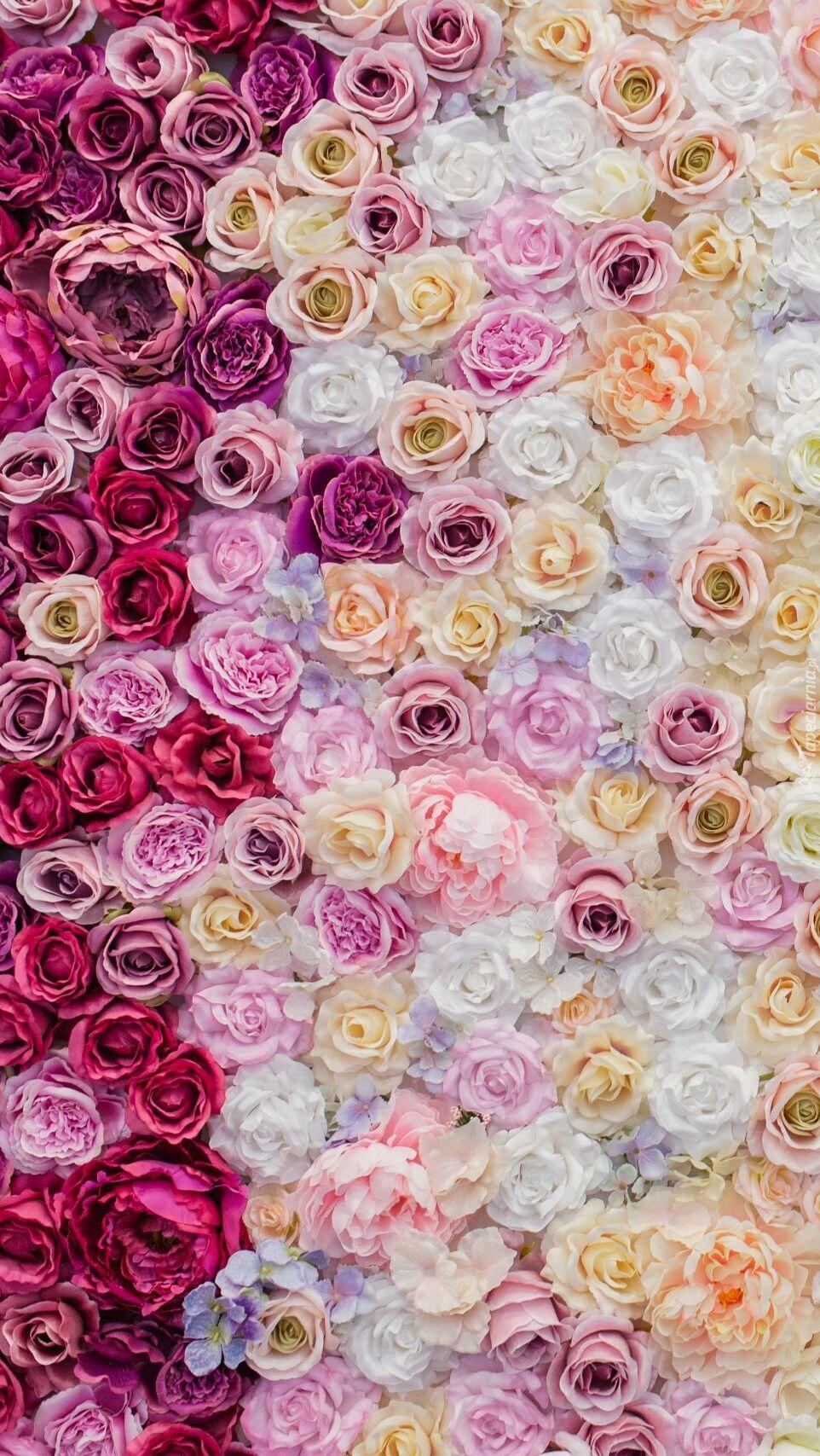 Różnokolorowe róże
