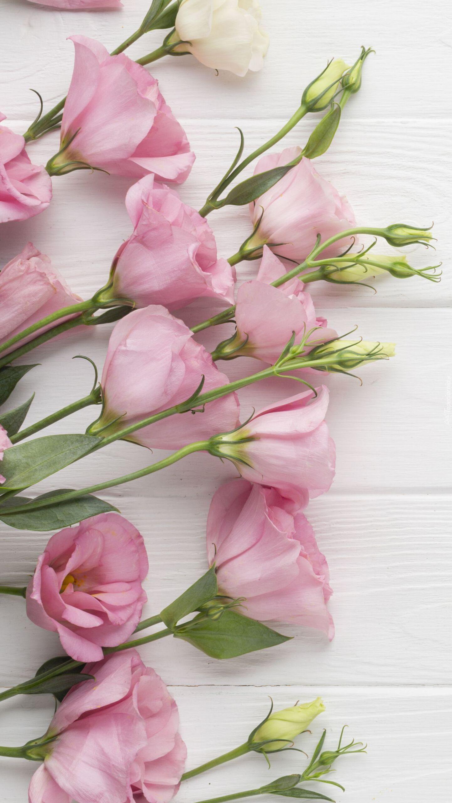 Różowa eustoma