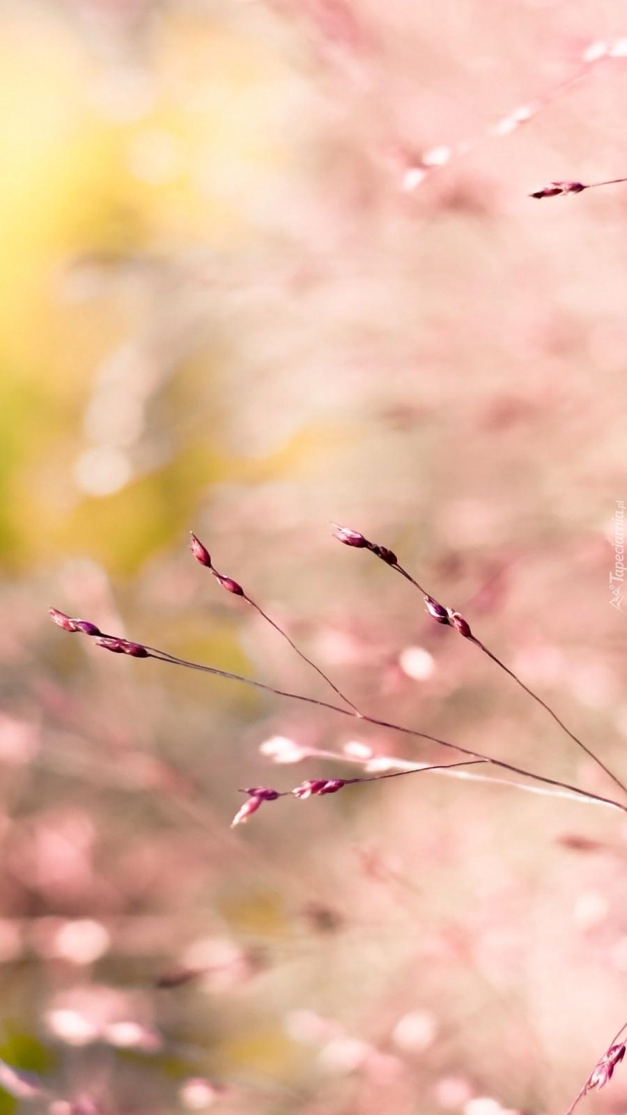 Różowe gałązki