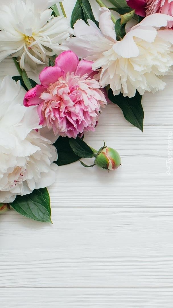 Różowe i białe piwonie