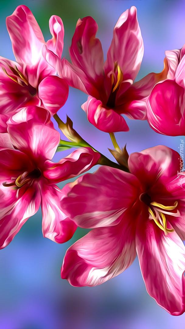 Różowo-białe kwiaty