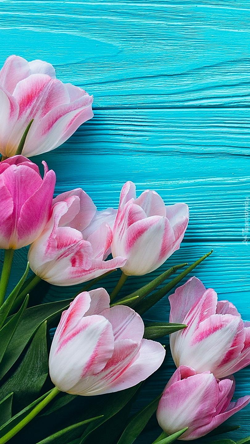 Różowo-białe tulipany