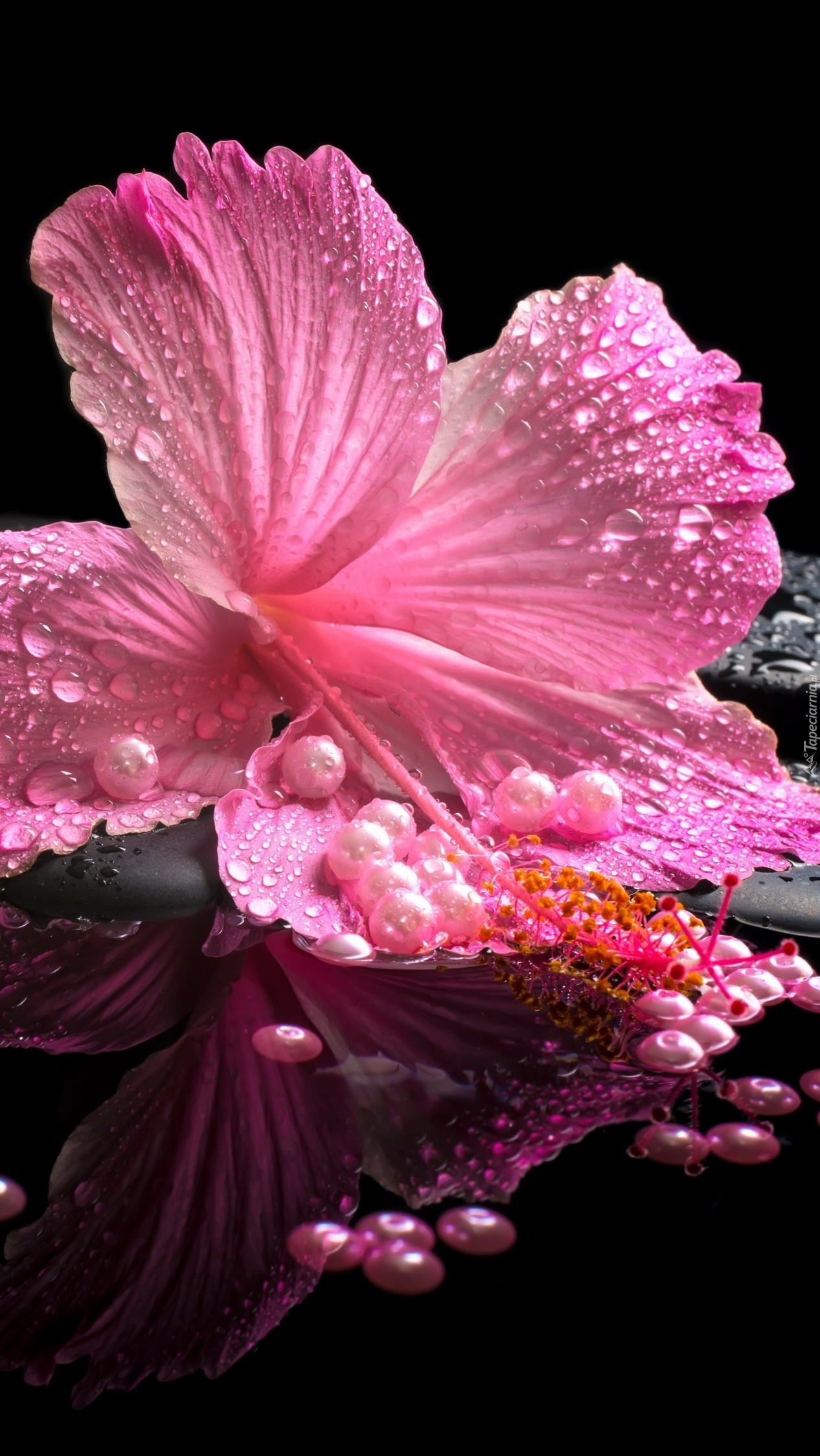 Różowy hibiskus z perłami