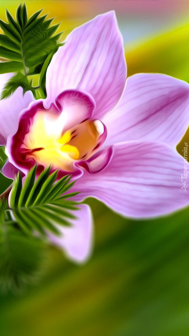 Różowy storczyk