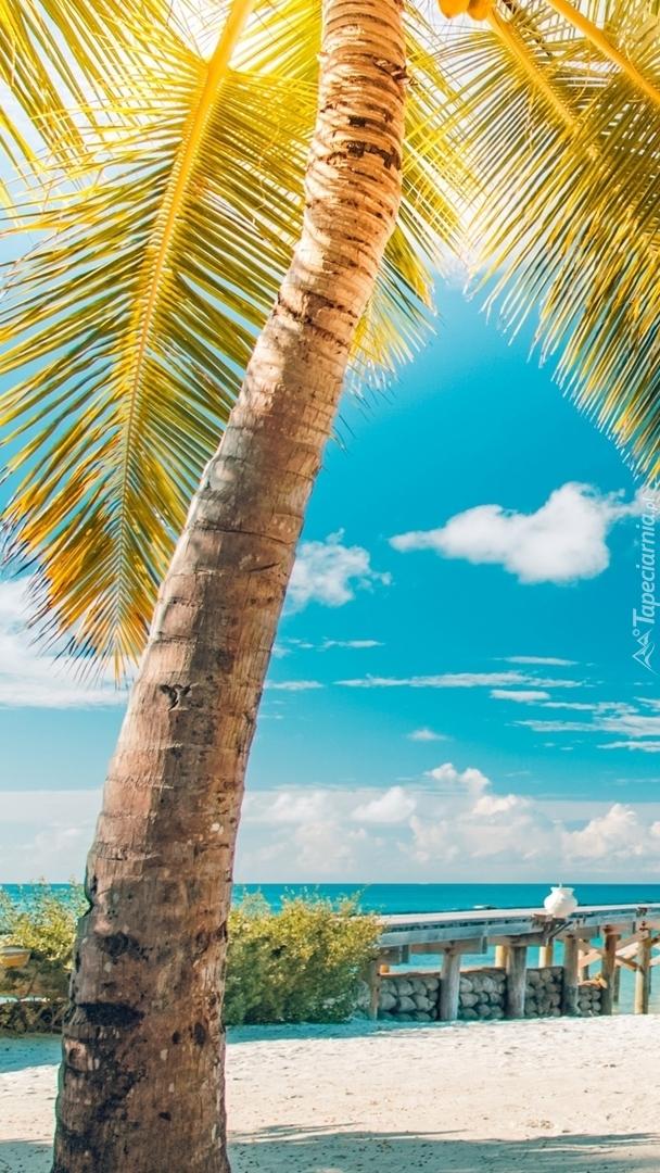 Rozświetlona palma