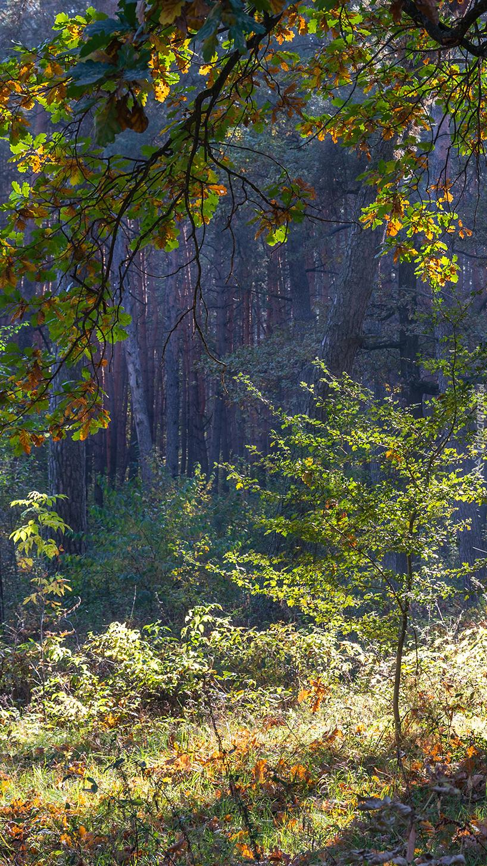 Rozświetlone drzewa i krzewy w lesie