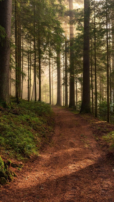 Rozświetlone drzewa i ścieżka w lesie