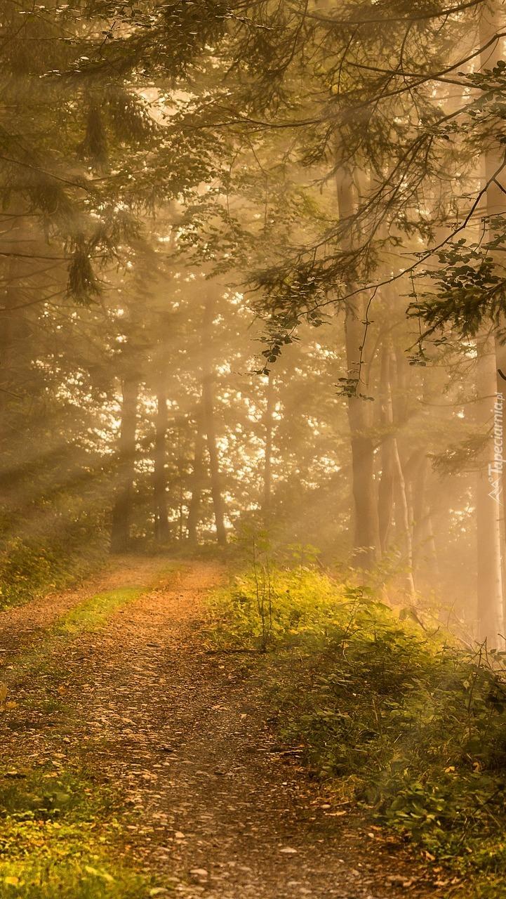 Rozświetlone drzewa w lesie