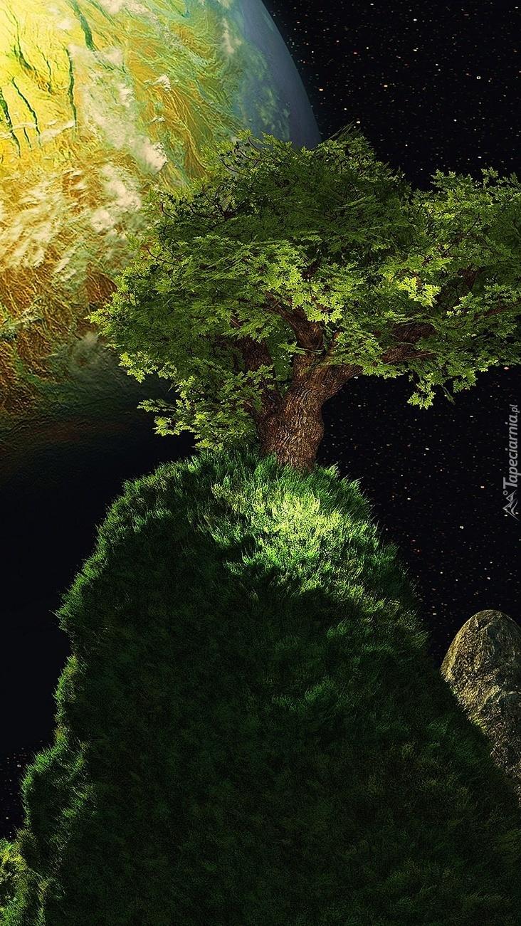 Rozświetlone drzewo