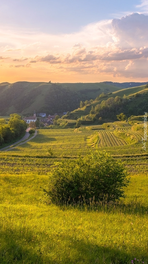Rozświetlone pola na wzgórzu