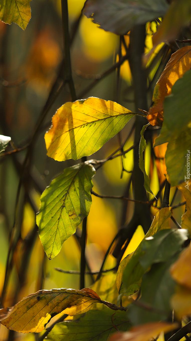 Rozświetlone pożółkłe liście