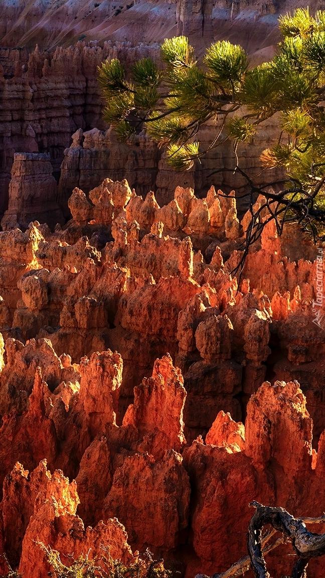 Rozświetlone skały w Bryce Canyon