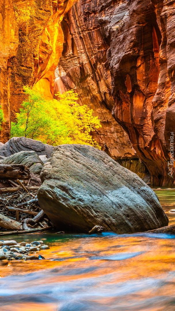 Rozświetlone skały w kanionie Zion Narrows