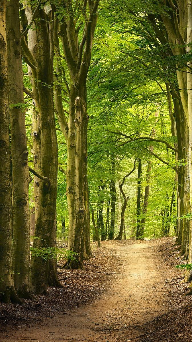 Rozświetlone zielone drzewa przy drodze
