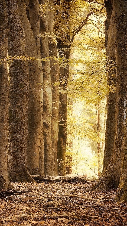 Rozświetlony liściasty las