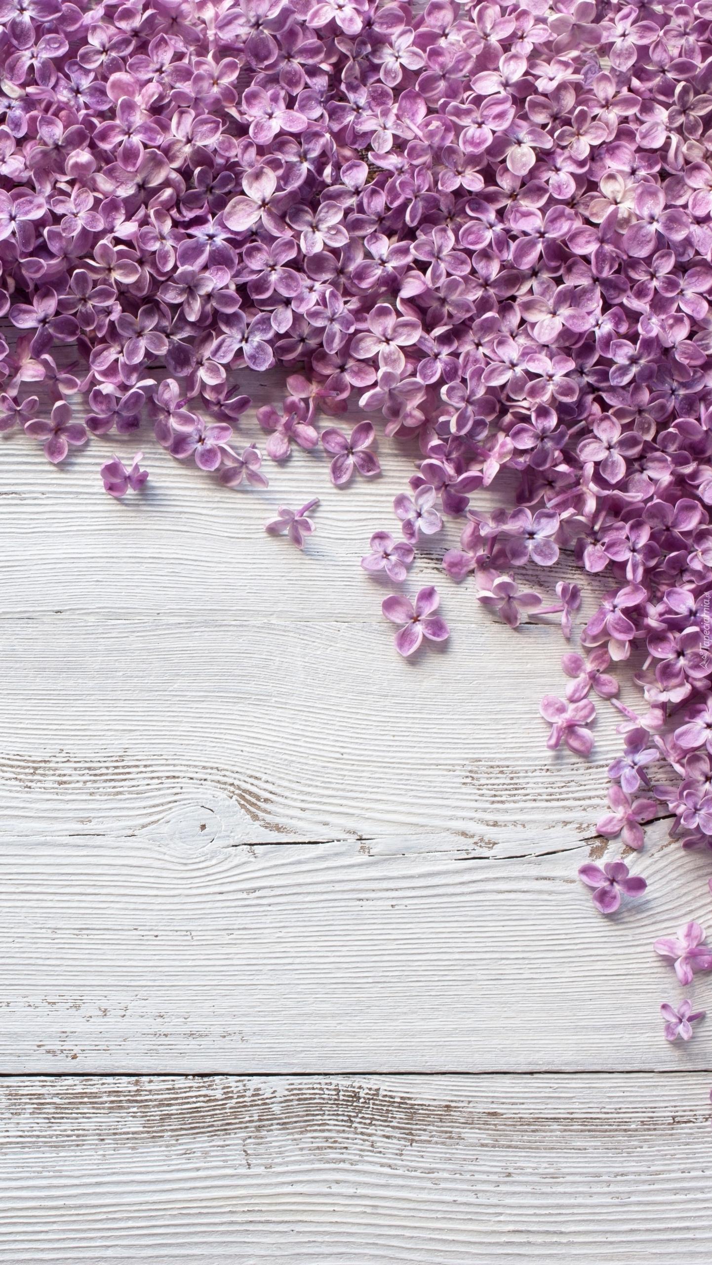 Rozsypane kwiaty bzu