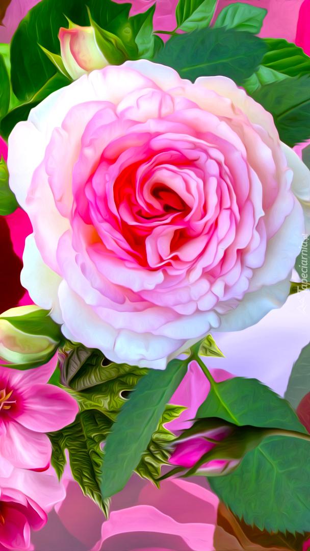 Rozwinięta róża