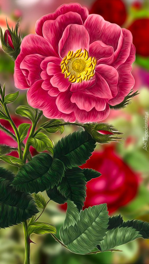 Rozwinięta róża w grafice