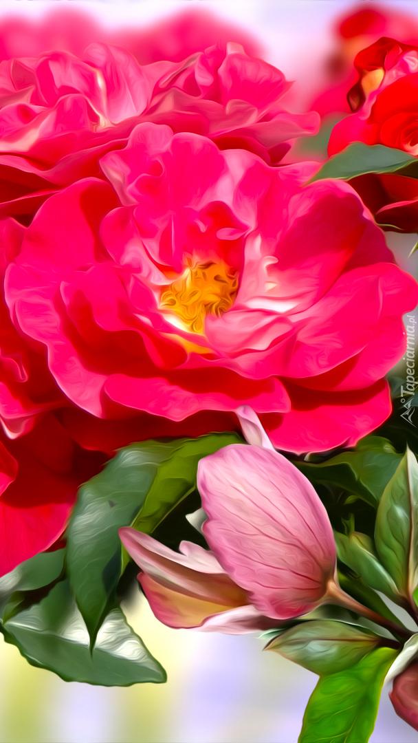 Rozwinięte czerwone róże