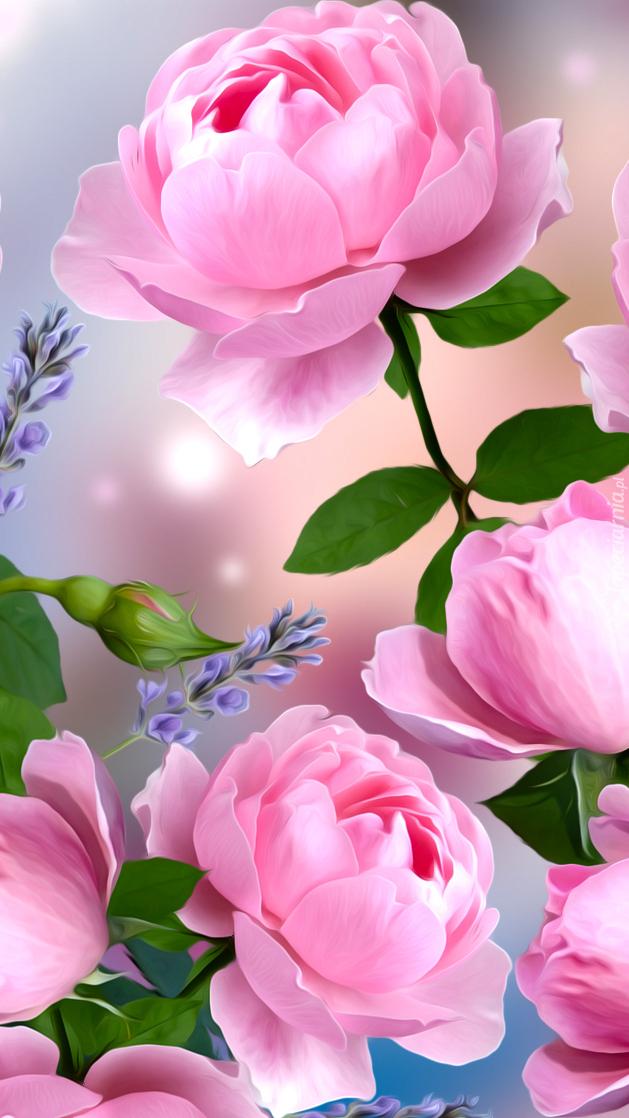 Rozwinięte różowe róże