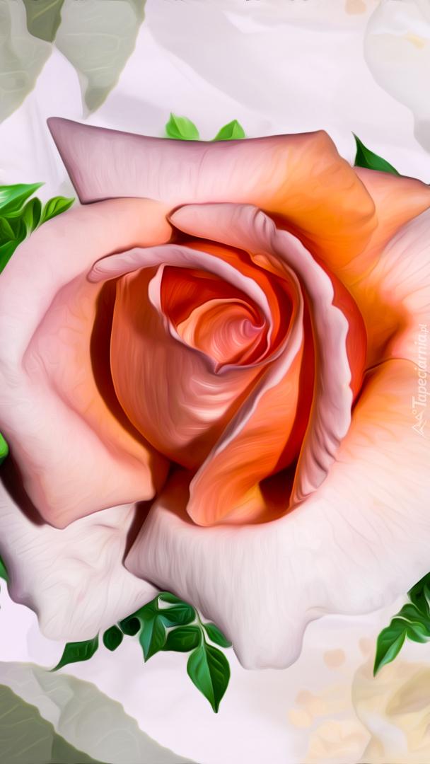Rozwinięty pąk róży
