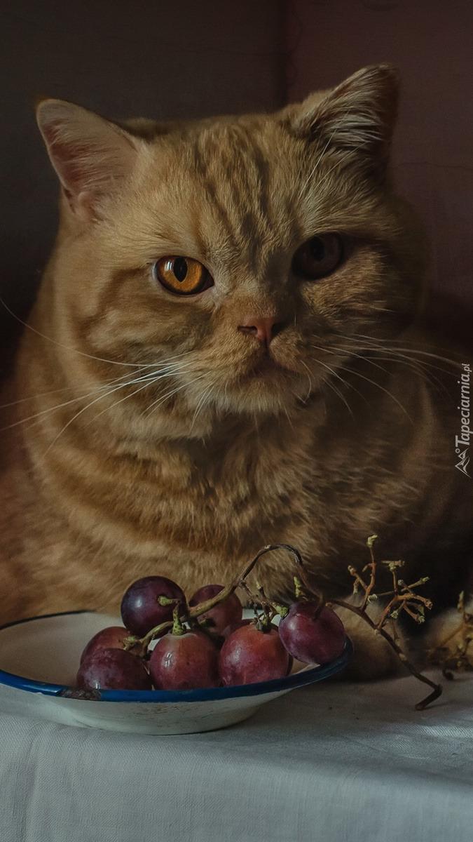 Rudawy kot przy misce z winogronem