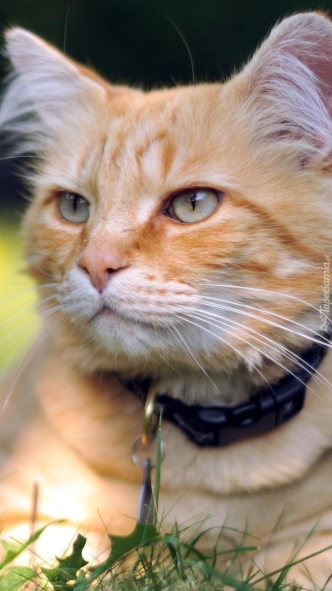 Rudy kociak na łące