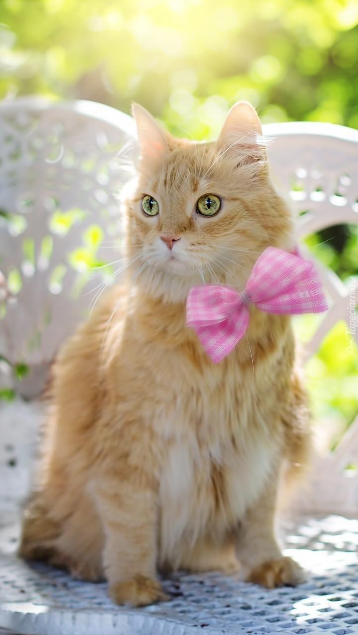 Rudy kot z różową muchą