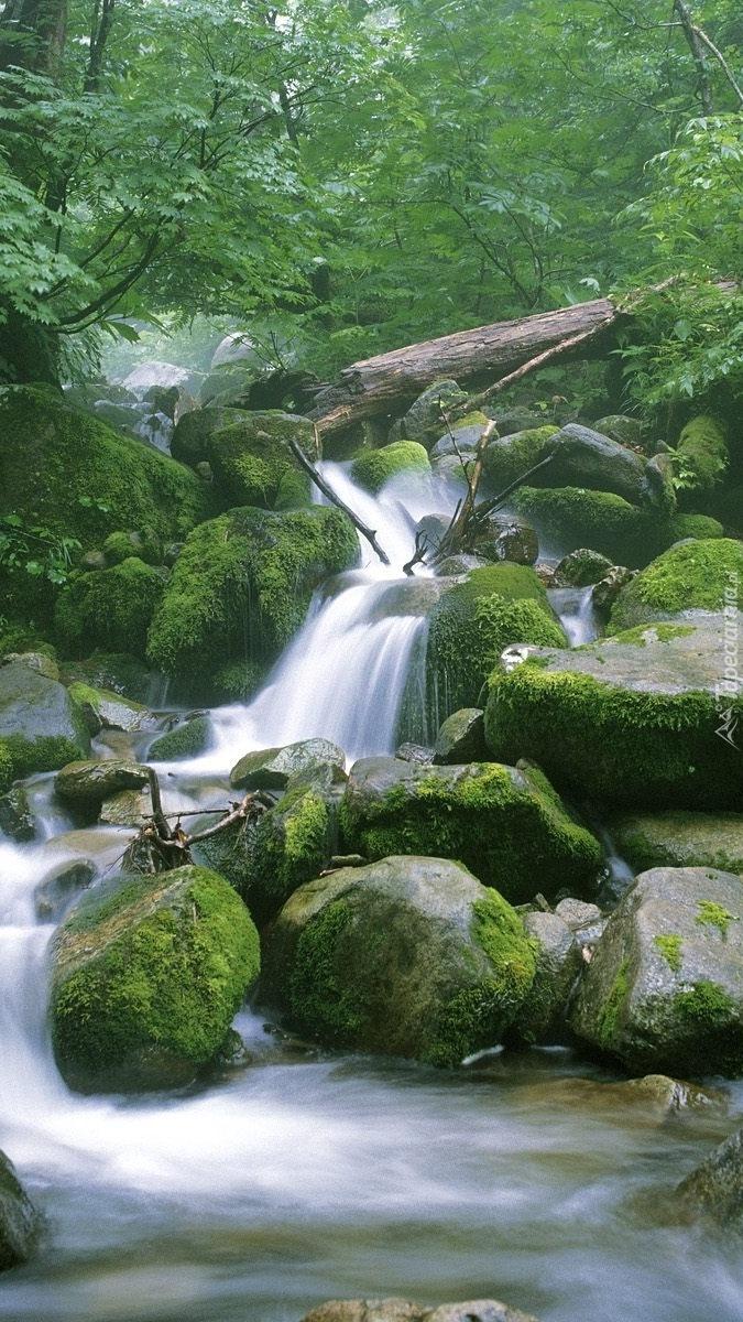 Rwąca leśna rzeka